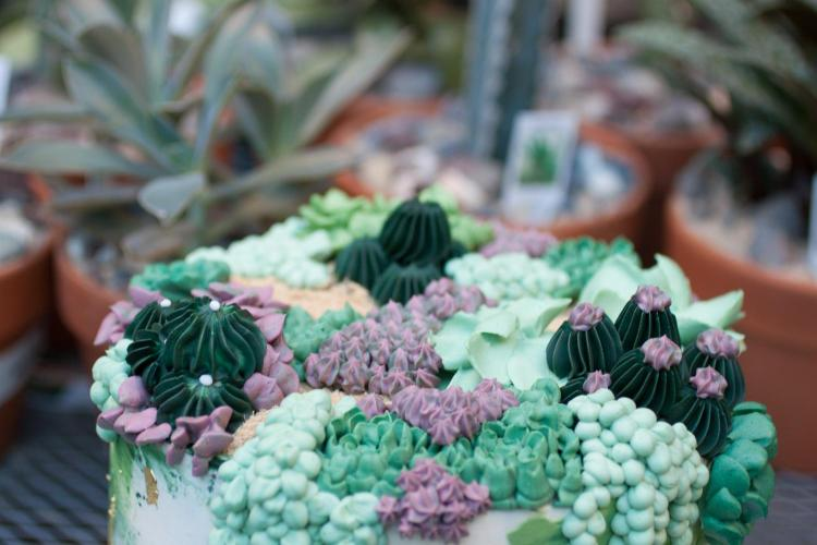 Vault & Vine Succulent Cake by Whipped Bakeshop